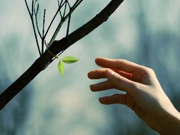 leaf tie tree