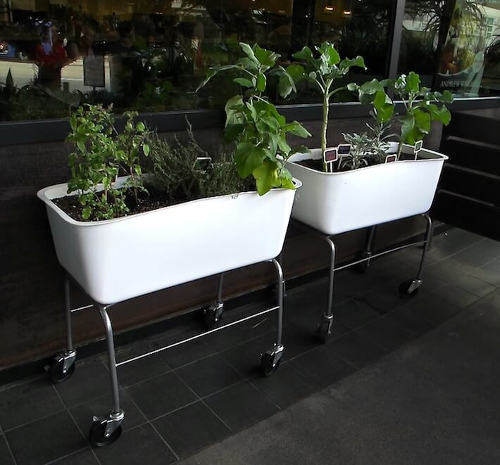 Repurposed basin planters-True Food Kitchen