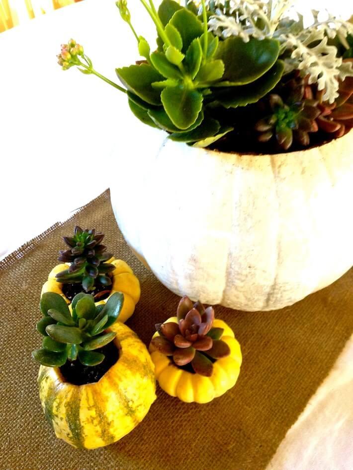 Gourds and pumpkin succulent planters