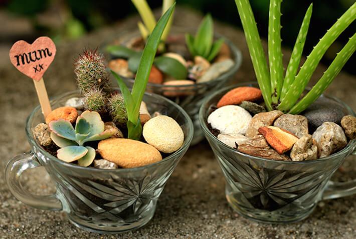 Succulents repurposed glassware containers