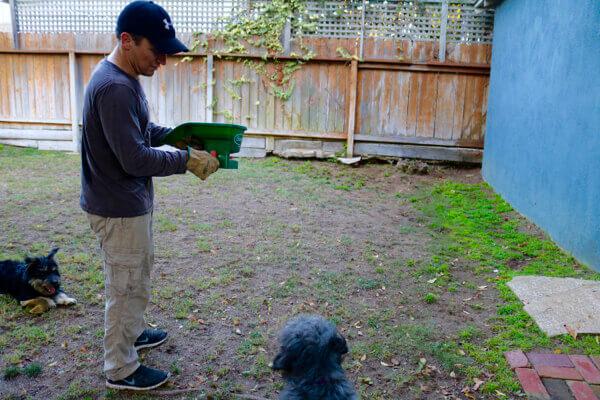 Seeding the lawn!