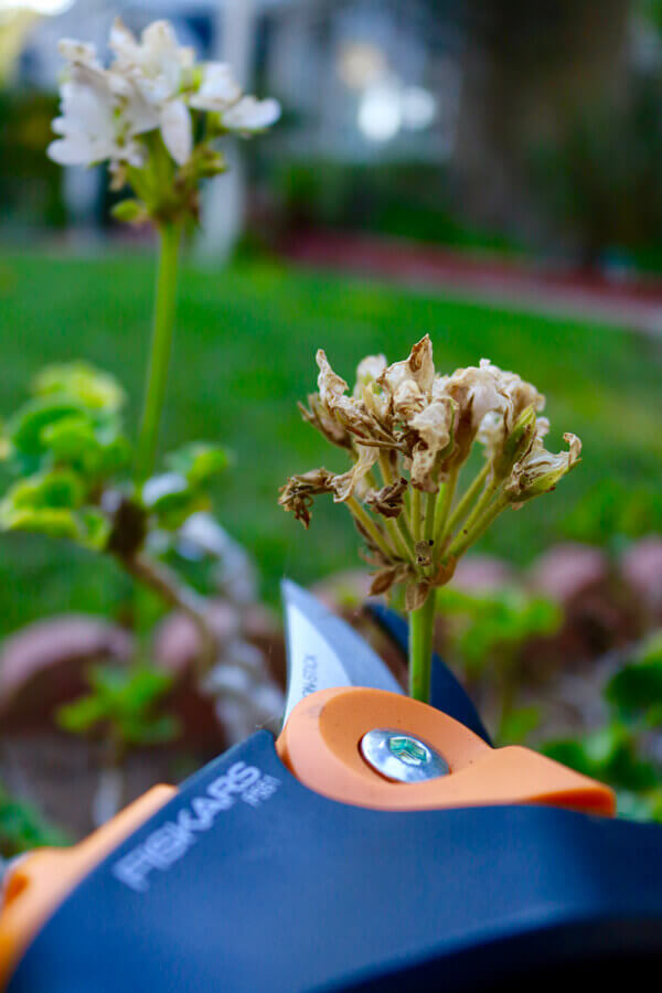Prune and clean up dead flowers. The PowerGear2 pruner makes this task a simple one.